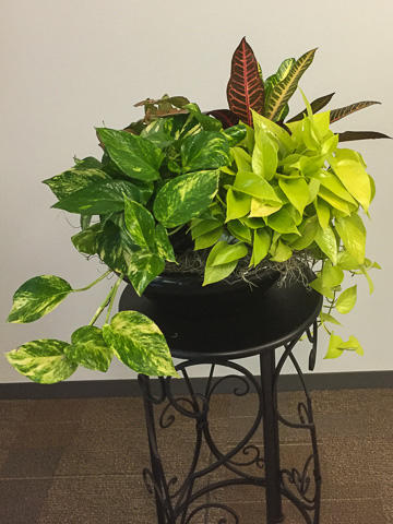 custom colorful office plants Houston