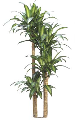 Indoor Plant Gallery – Houston – plants for sale, leasing ...