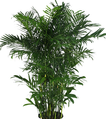 Medium Light Indoor Plants For Houston Office Lobby And Home