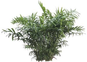 Low Light Indoor Plants For Houston Area Office Lobby And