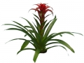 Bromeliad Guzmania Lavendar  - office plants Houston TX
