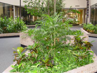 Indoor Plant Services, Leasing and Rental Houston Tx , planter lobby area