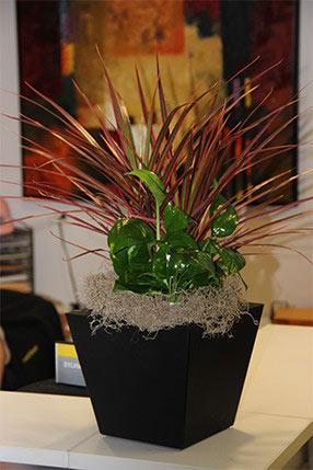 Custom Indoor Plant Design Houston, TX