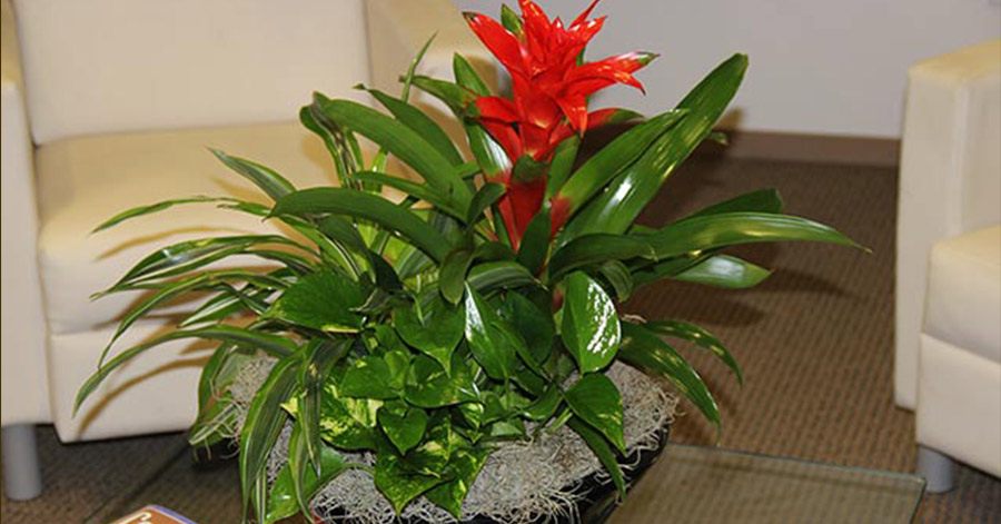 Custom Indoor Plant and bromeliad arrangement - Interior Landscape Houston Tx area building lobby.