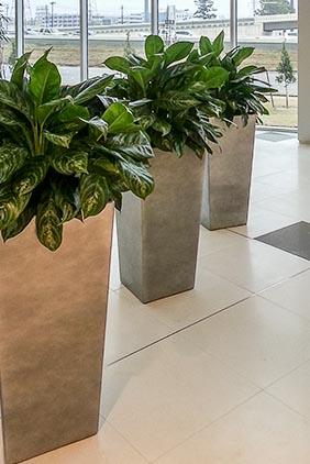 Indoor Plants, Interior Landscape lobby area in Houston, TX